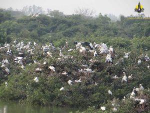 Nelapattu bird sanctuary6 Copy