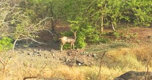 Gir Forest Opening Dates