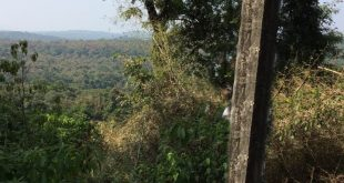 Dandeli Safari Timings