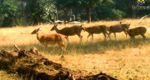 Pench Safari