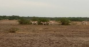 Little Rann Of Kutch Tour Packages